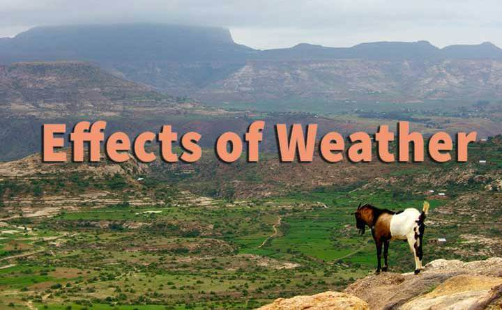 effects of weather