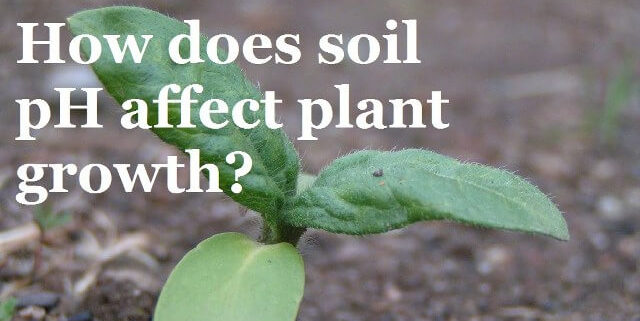 how does soil ph affect plant growth